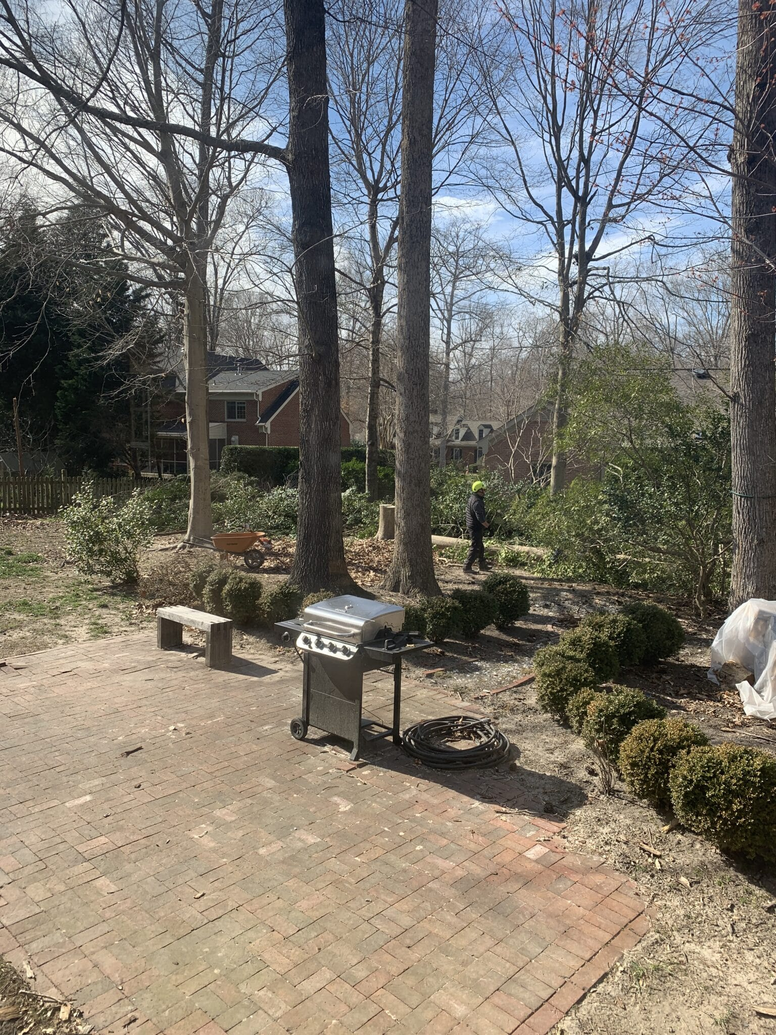 Our backyard while trees are being removed.