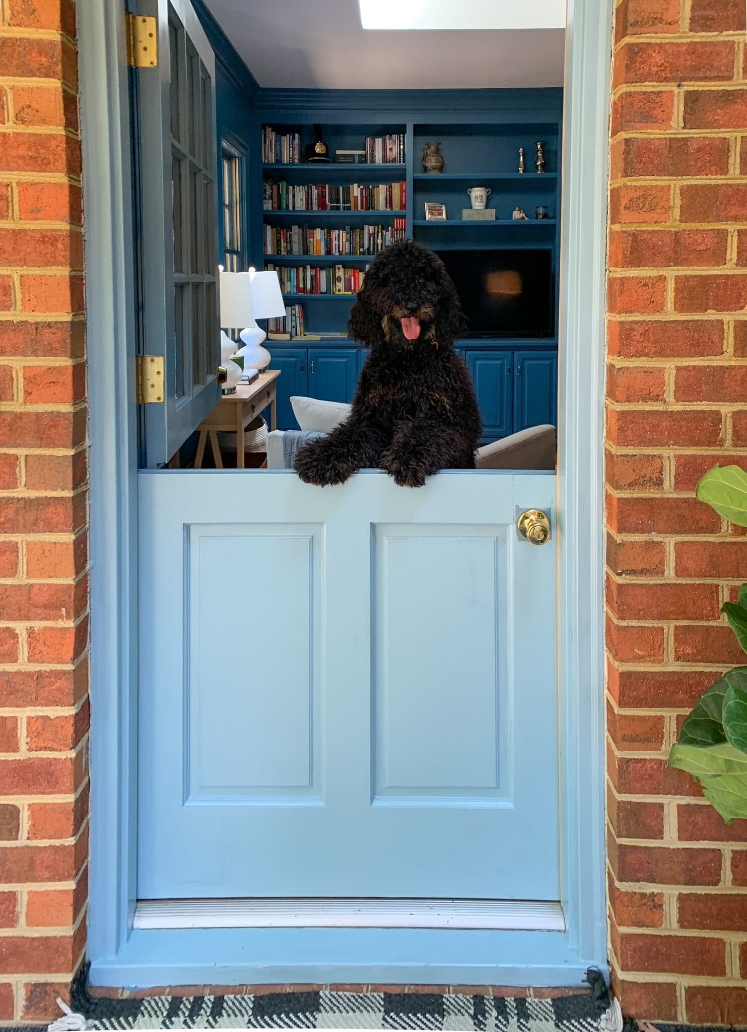 Our light blue Sherwin Williams Dutch Door open with the black dog peeking out.